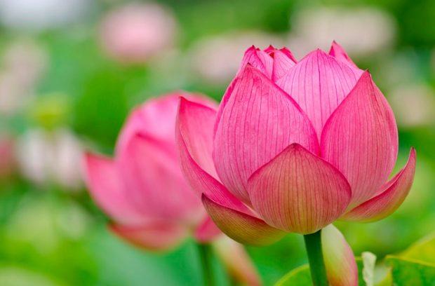 عکسهای جدید گل خیلی قشنگ برای پروفایل واتساپ تلگرام فیس بوک