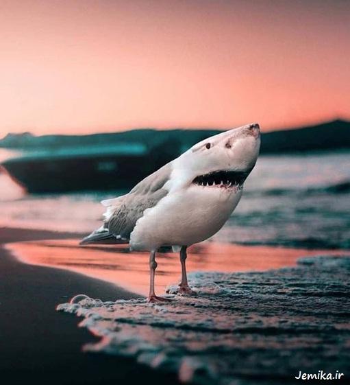 عکس های خنده دار و جالب حیوانات
