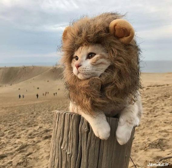 عکس خنده دار حیوانات وحشی
