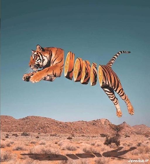 عکس خنده دار حیوانات وحشی زیبا