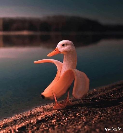 عکس خنده دار جدید از حیوانات