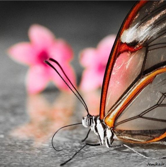 عکسهای پس زمینه ویندوز 7 پروانه