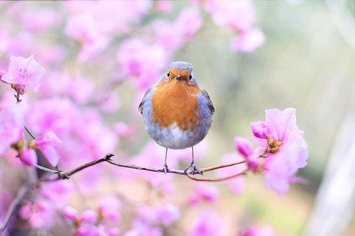 عکس گل و پرنده برای پروفایل شیک و قشنگ