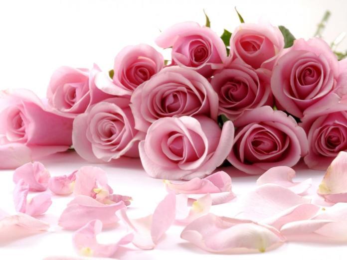 عکسهای قشنگ و جدید گل و طبیعت پروفایل تلگرام واتساپ و فیسبوک