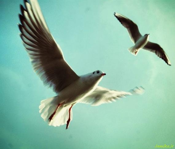 تصاویر جالب پشت زمینه پرندگان