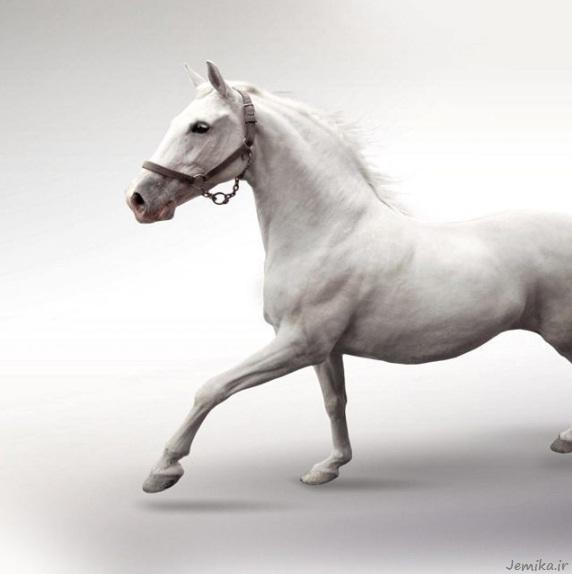 عکس پشت زمینه hd اسب